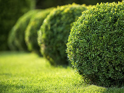 A1 Walls and Landscaping's Tree Service Gallery